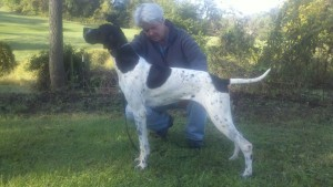 English Pointer puppy Zwei at 7 mos 1 week