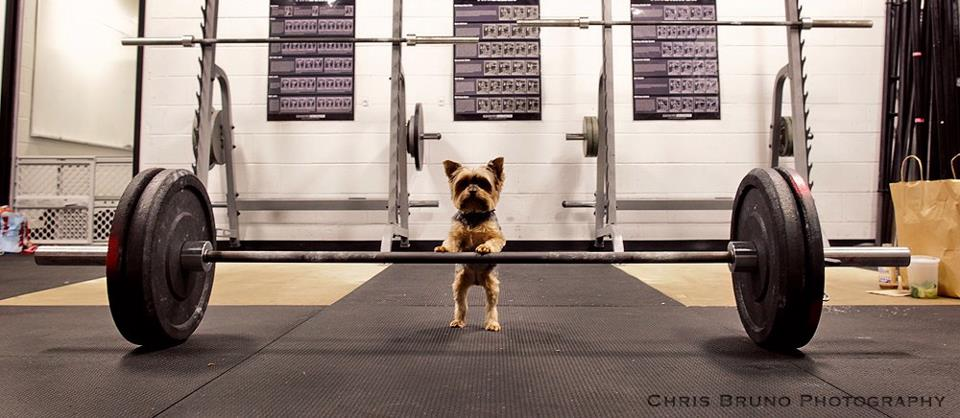 Resolutions (or confessions of a fat dog trainer)