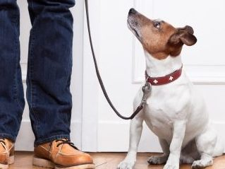 Jump Start Obedience Boot Camp