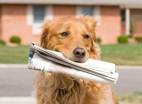 Dog Training in Maryland