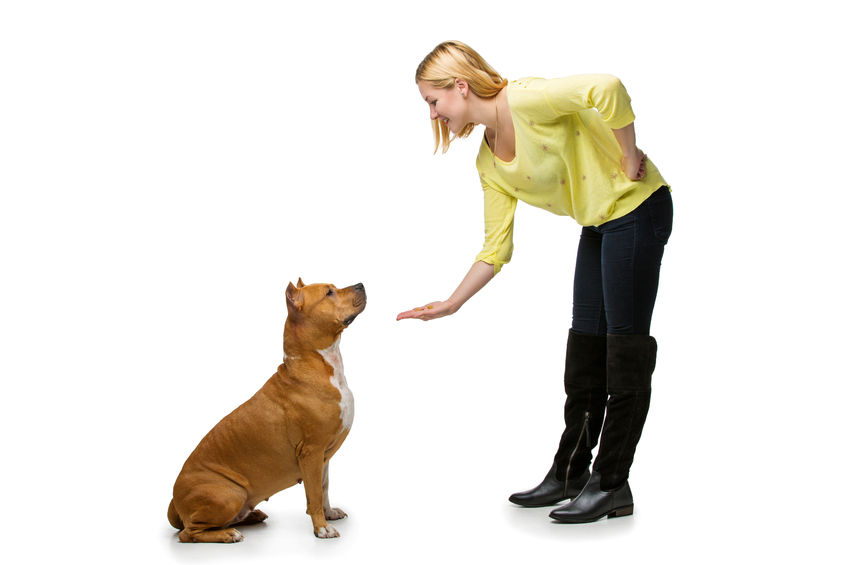Dog Obedience Training Carroll County Md