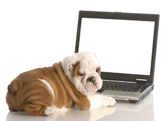 online dog training for dogs and puppies, Maryland dog obedience online learning